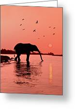 Sunset With Elephant Greeting Card by Christian Heeb