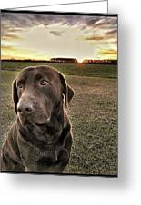 Sunset With My Good Boy Brownie  Greeting Card