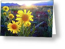 Sunsets And Sunflowers In Buena Vista Greeting Card
