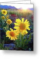 Sunsets And Sunflowers Of Buena Vista 2 Greeting Card