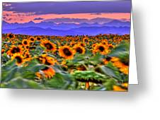 Sunsets And Sunflowers Greeting Card