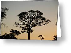 Sunsetting Thru The Trees Greeting Card