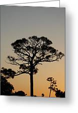 Sunsetting Trees Greeting Card