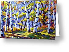 Sunshine And Birches Greeting Card