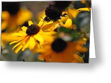 Sunshine And Daisies Greeting Card