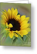 Sunshine Beauty - Sunflower Greeting Card