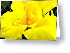 Sunshine Brilliance Greeting Card