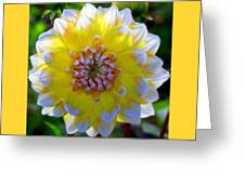Sunshine Dahlia Greeting Card by Karen Wiles