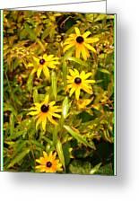 Sunshine Daisies Greeting Card