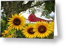 Sunshine In The Fog Greeting Card