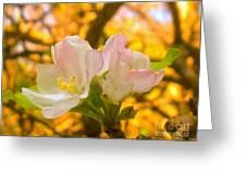Sunshine On Apple Blossoms Greeting Card