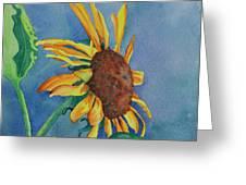 Sunshine On My Shoulders Greeting Card