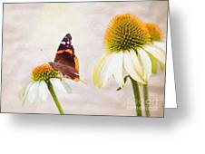 Sunshine On Red Admiral Greeting Card