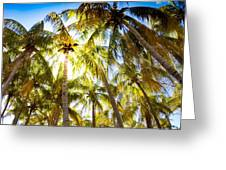 Sunshine Palms Greeting Card