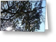Sunshine Passes Pine  Greeting Card