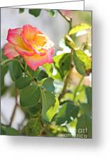 Sunshine Rose Greeting Card