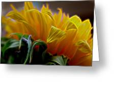 Sunshine Sunflower Petals Two Greeting Card