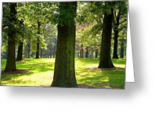 Sunshine Trees Forest Park Greeting Card