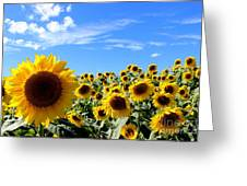 Sunshiny Day Greeting Card