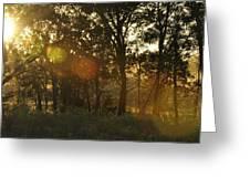Sunspots Greeting Card