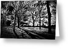 Super Contrasted Trees Greeting Card