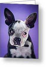 Super Pets Series 1 - Bugsy Close Up Greeting Card