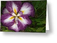 Super-sized Iris Greeting Card