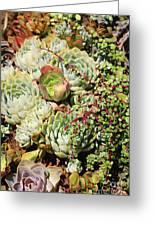 Super Succulents Greeting Card