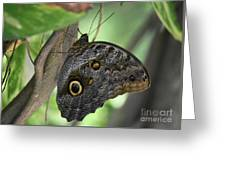 Superb Markings On An Owl Butterfly In A Garden Greeting Card