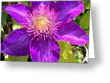 Supreme Violet Greeting Card