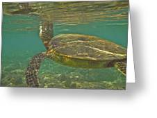 Surfacing Seaturtle Greeting Card