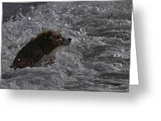 Surfer Dog 1 Greeting Card