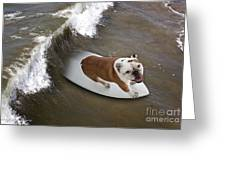 Surfer Dog Greeting Card
