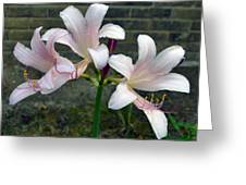 Surprise Lilies Greeting Card