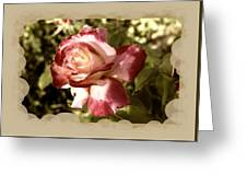 Surprise Rose Greeting Card
