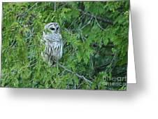 Surprise Visitor II Greeting Card