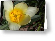 Surprising Sunny Tulip Greeting Card