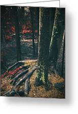 Surreal Red Leaves In A Dark Forest Finland Greeting Card