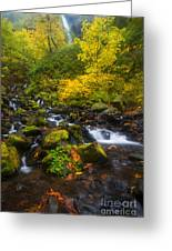 Surrounded By Fall Color Greeting Card