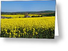 Surrounded By Rapeseed Flowers Greeting Card