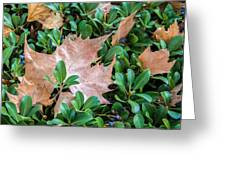 Surrounded Leaf Greeting Card