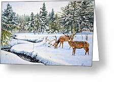 Surviving The Winters Greeting Card