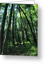 Susan Creek Indian Mound Trail Greeting Card
