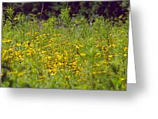 Susans In A Green Field Greeting Card