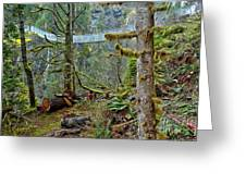 Suspended In The Rain Forest Greeting Card