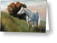 Suzie  Arabian Horse Portrait Painting Greeting Card