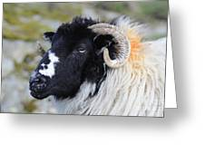Swaledale Ewe. Greeting Card