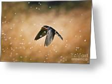 Swallow In Rain Greeting Card