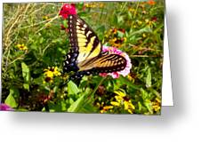 Swallow Tail Butterfly Enjoying The Sunshine Greeting Card