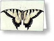 Swallow-tail Butterfly Greeting Card